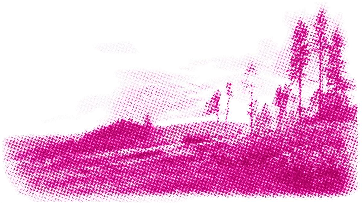 Natur Wald