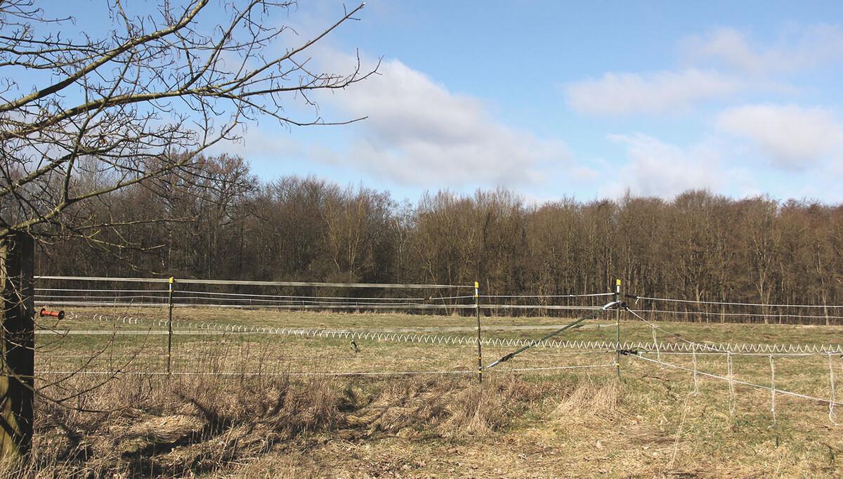 Wohldorfer Wald. Schaffung von Landlebensräumen und Gewässern
