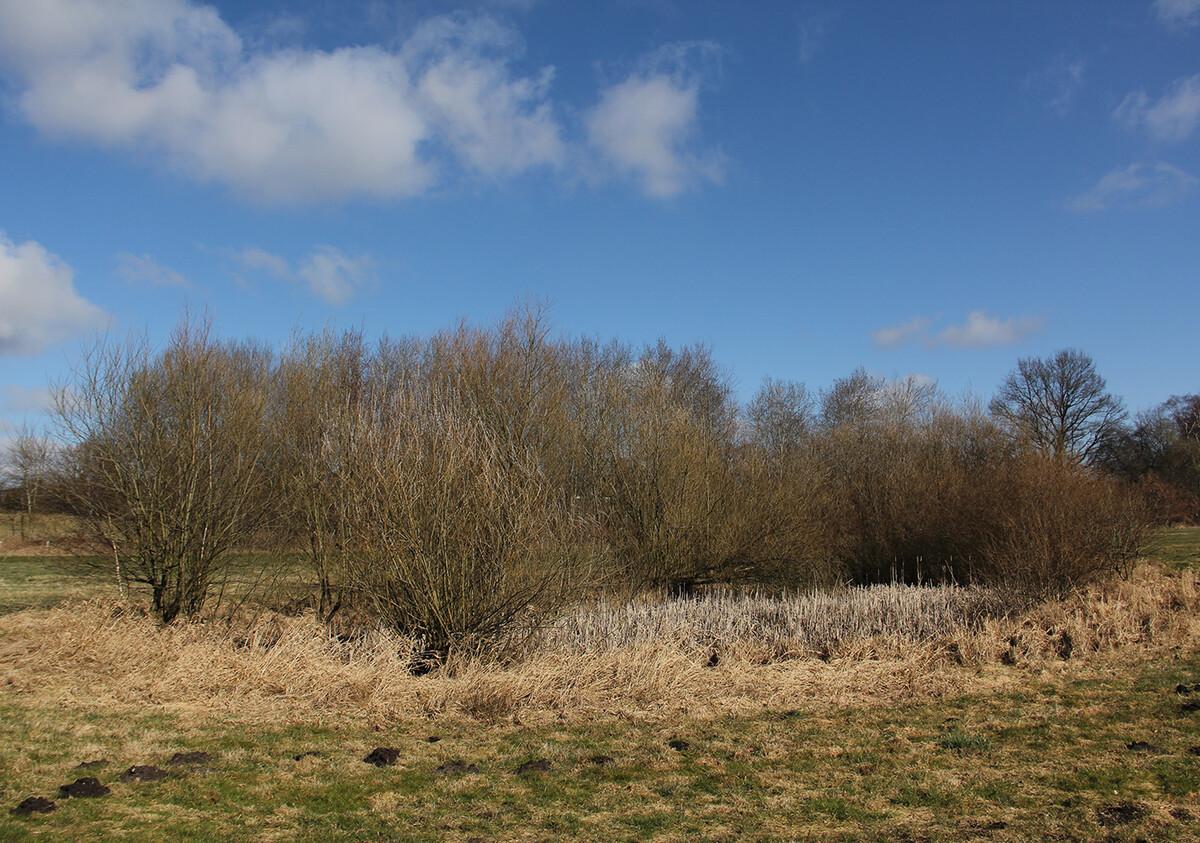 Ausgleichsfläche im Stellmoorer Tunneltal/Höltigbaum als neuer Lebensraum für Amphibien