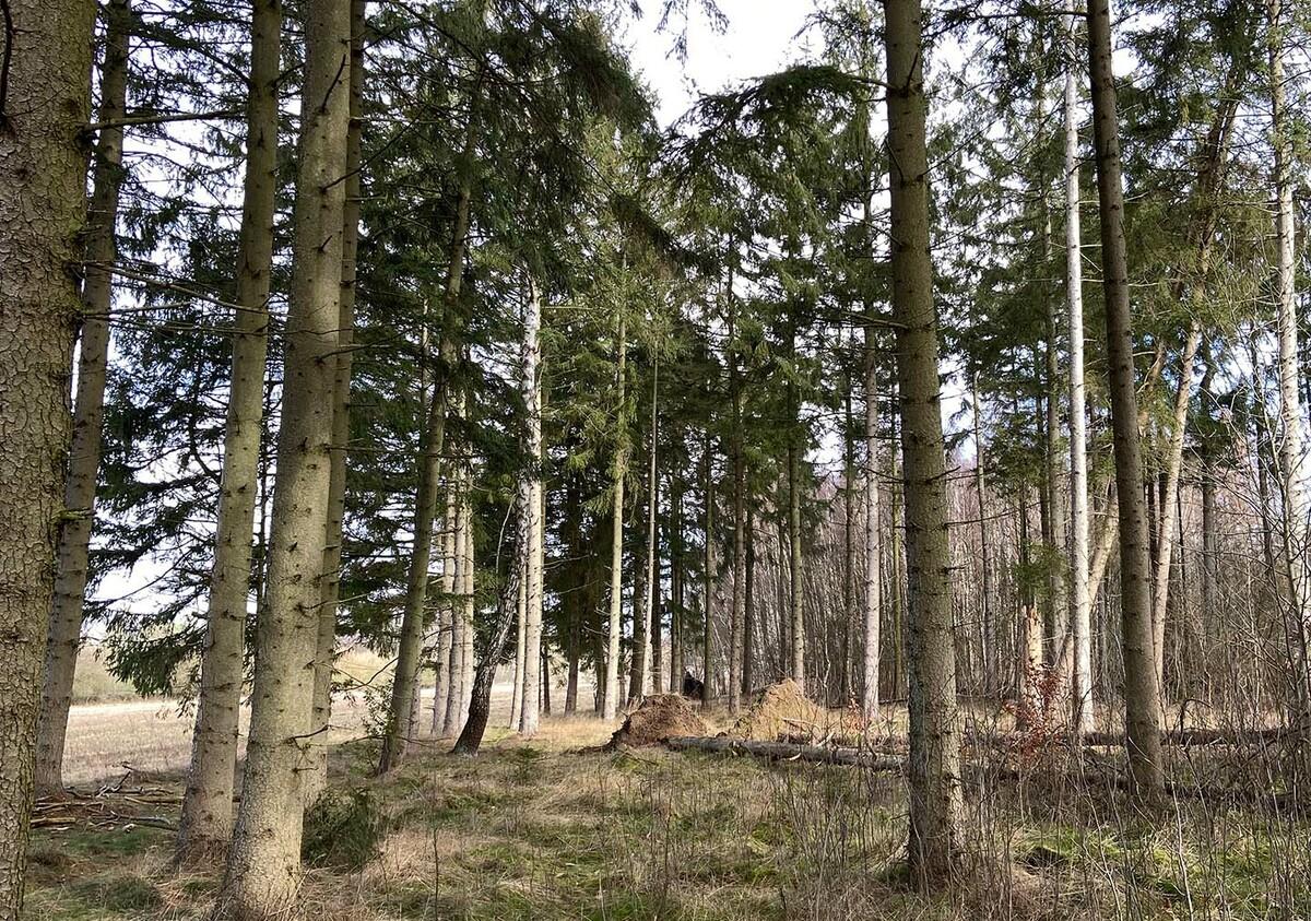 Aufforstung eines Waldstücks in Hamburg-Lemsahl - Mellingstedt